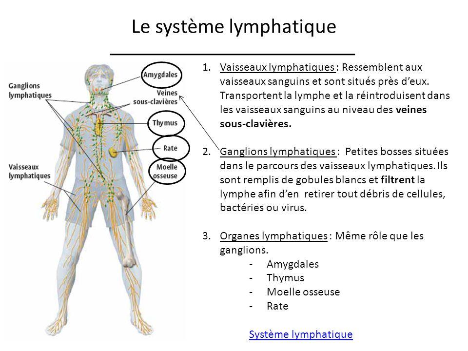 Le système lymphatique 1.Vaisseaux lymphatiques : Ressemblent aux vaisseaux sanguins et sont situés près deux.
