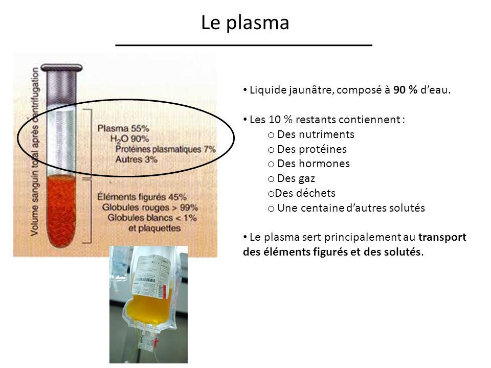 Le plasma Liquide jaunâtre, composé à 90 % deau.