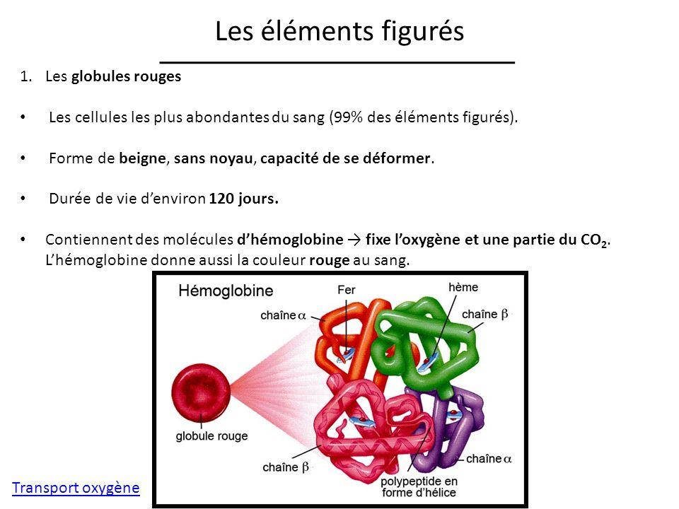 Les éléments figurés 1.Les globules rouges Les cellules les plus abondantes du sang (99% des éléments figurés).