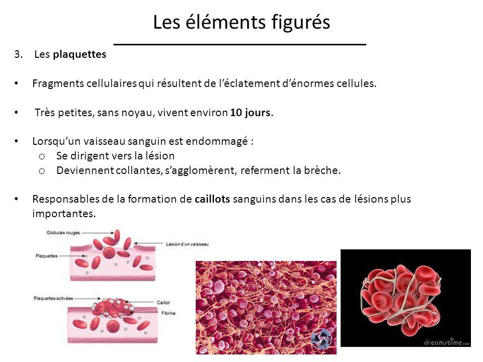 Les éléments figurés 3.