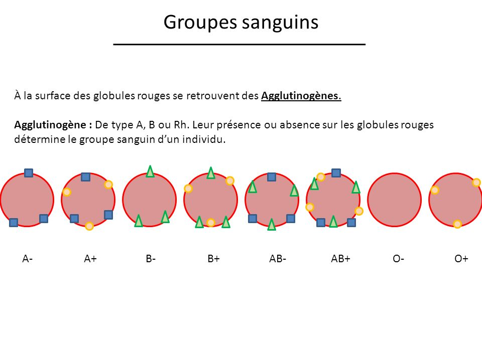 Groupes sanguins À la surface des globules rouges se retrouvent des Agglutinogènes.