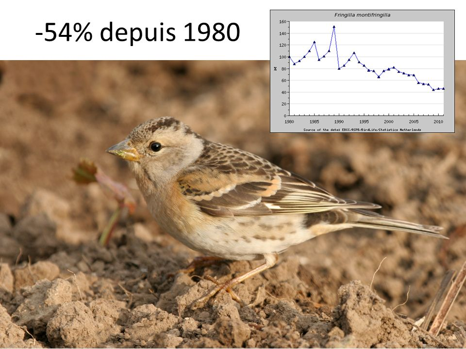 -54% depuis 1980