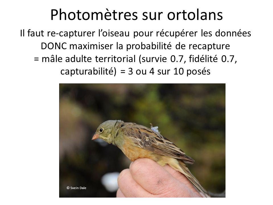Photomètres sur ortolans © Svein Dale Il faut re-capturer loiseau pour récupérer les données DONC maximiser la probabilité de recapture = mâle adulte territorial (survie 0.7, fidélité 0.7, capturabilité) = 3 ou 4 sur 10 posés