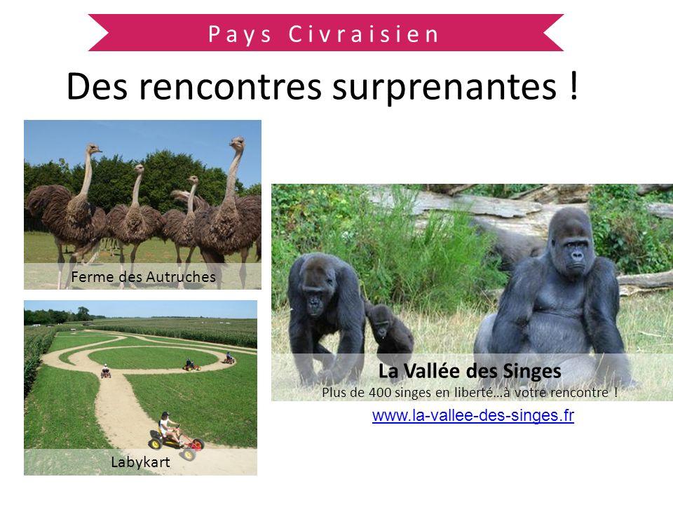 Pays Civraisien Des rencontres surprenantes ! Ferme des Autruches La Vallée des Singes Plus de 400 singes en liberté…à votre rencontre ! Labykart www.