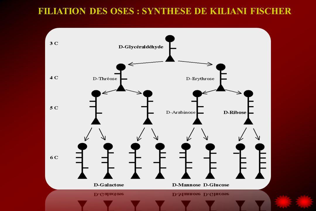 FILIATION DES OSES : SYNTHESE DE KILIANI FICHER Addition dacide cyanhydrique Première étape Érythrose
