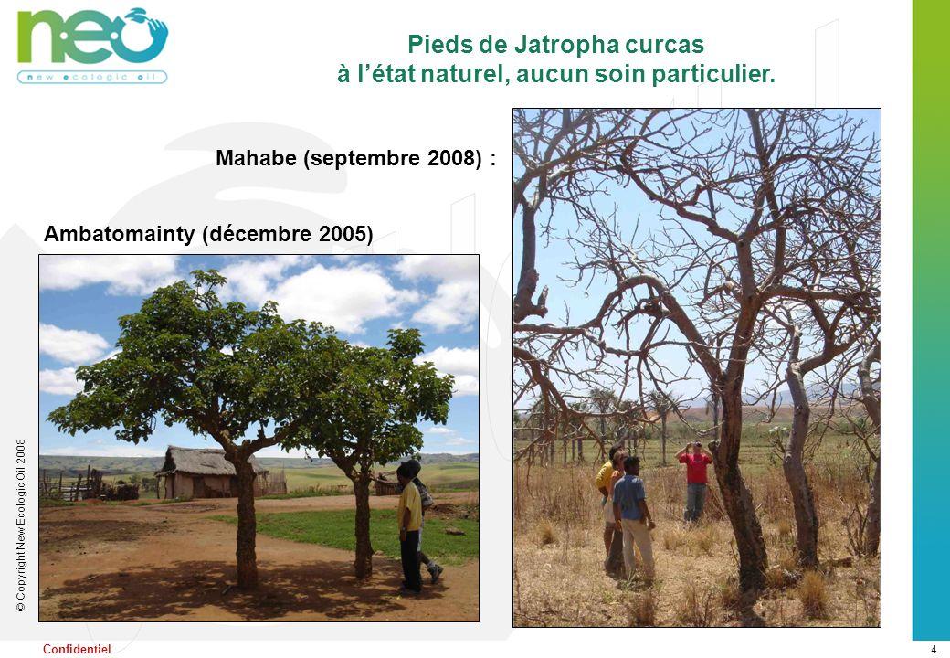 4 © Copyright New Ecologic Oil 2008 Confidentiel Mahabe (septembre 2008) : Pieds de Jatropha curcas à létat naturel, aucun soin particulier. Ambatomai