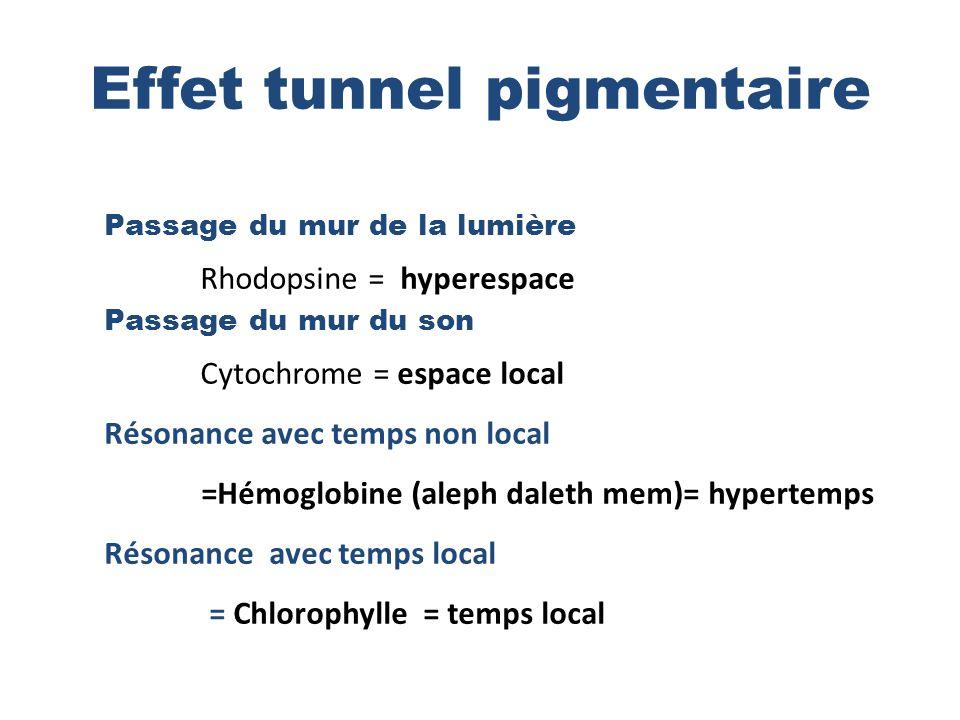 Effet tunnel pigmentaire Passage du mur de la lumière Rhodopsine = hyperespace Passage du mur du son Cytochrome = espace local Résonance avec temps non local =Hémoglobine (aleph daleth mem)= hypertemps Résonance avec temps local = Chlorophylle = temps local
