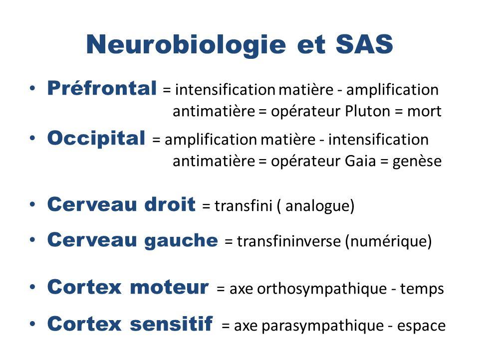 Neurobiologie et SAS Préfrontal = intensification matière - amplification antimatière = opérateur Pluton = mort Occipital = amplification matière - intensification antimatière = opérateur Gaia = genèse Cerveau droit = transfini ( analogue) Cerveau gauche = transfininverse (numérique) Cortex moteur = axe orthosympathique - temps Cortex sensitif = axe parasympathique - espace