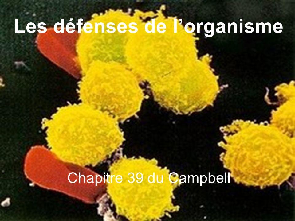 Structures et fonctions du vivant: Les défenses de lorganisme Collège Ahuntsic, Geneviève Bernier, 15 mars 2004 1 Chapitre 39 du Campbell Les défenses