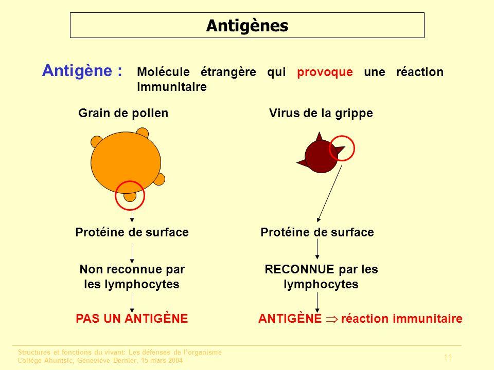 Structures et fonctions du vivant: Les défenses de lorganisme Collège Ahuntsic, Geneviève Bernier, 15 mars 2004 11 Antigènes Antigène : Molécule étran