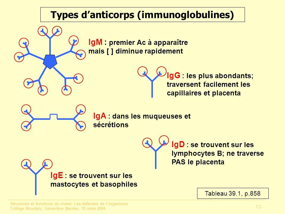 Structures et fonctions du vivant: Les défenses de lorganisme Collège Ahuntsic, Geneviève Bernier, 15 mars 2004 13 Types danticorps (immunoglobulines)