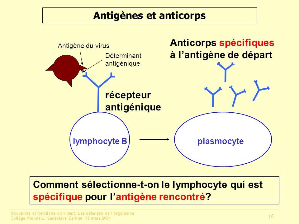Structures et fonctions du vivant: Les défenses de lorganisme Collège Ahuntsic, Geneviève Bernier, 15 mars 2004 16 Antigènes et anticorps lymphocyte B