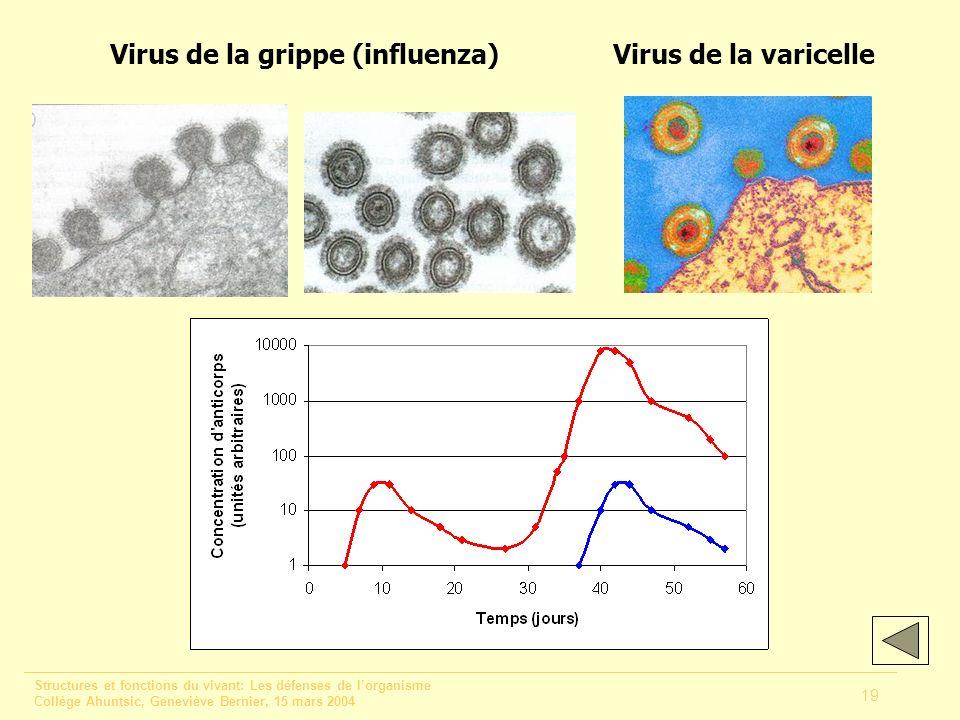Structures et fonctions du vivant: Les défenses de lorganisme Collège Ahuntsic, Geneviève Bernier, 15 mars 2004 19 Virus de la grippe (influenza)Virus