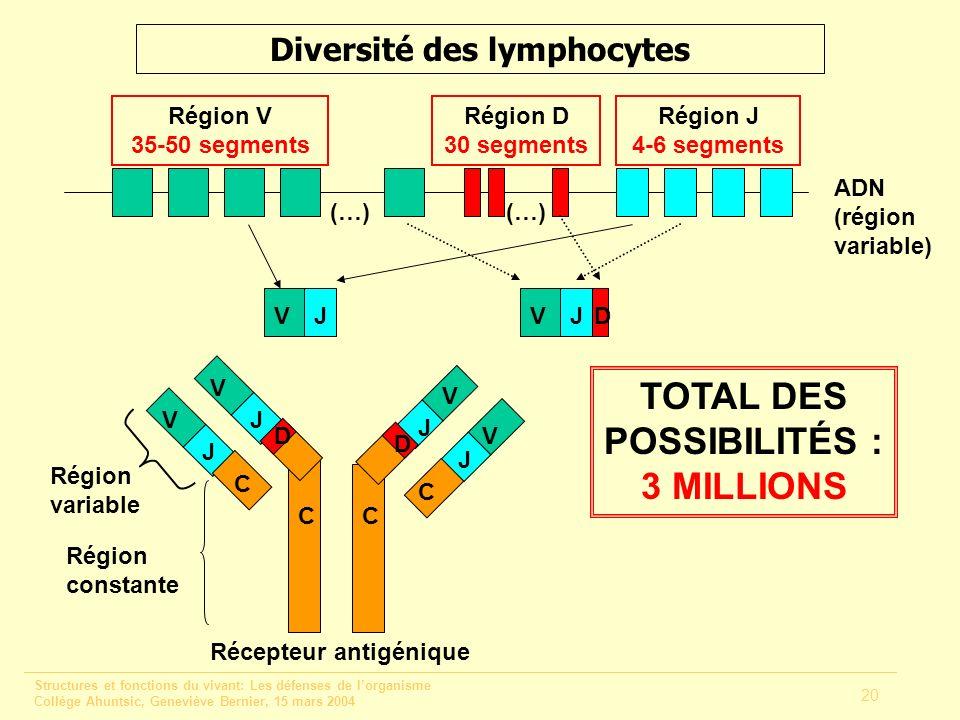 Structures et fonctions du vivant: Les défenses de lorganisme Collège Ahuntsic, Geneviève Bernier, 15 mars 2004 20 Diversité des lymphocytes (…) ADN (