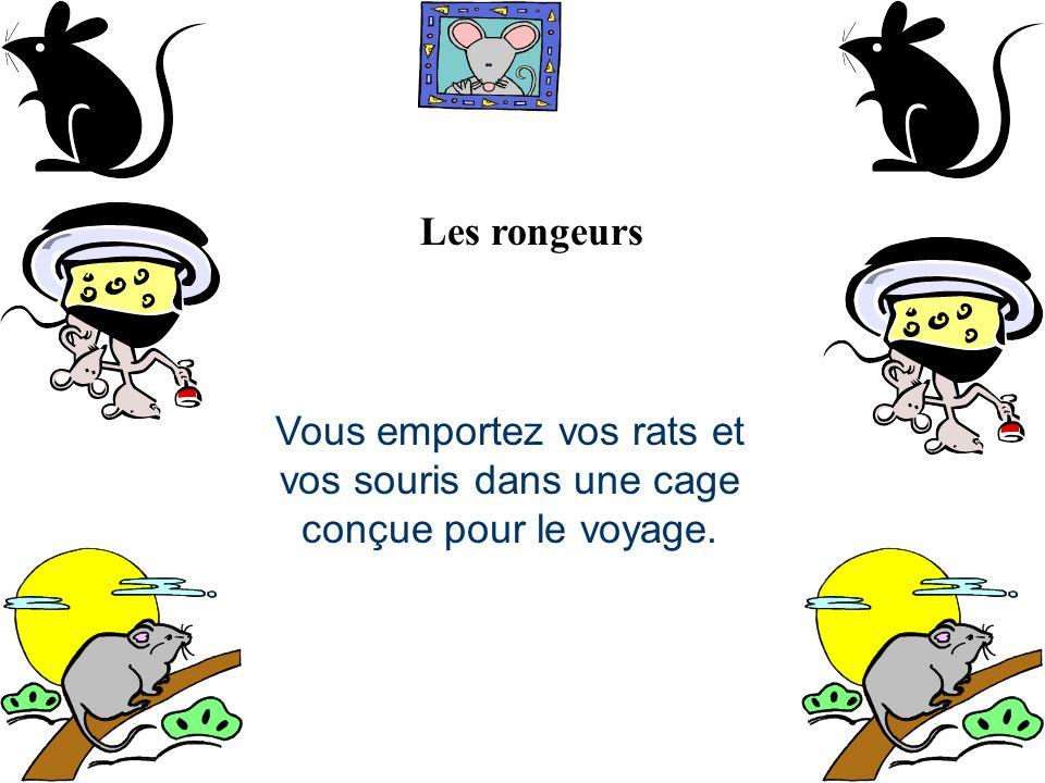Les rongeurs Vous emportez vos rats et vos souris dans une cage conçue pour le voyage.