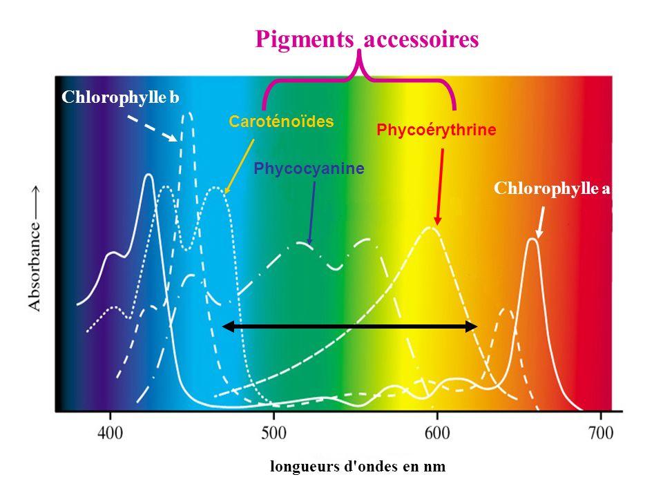 longueurs d'ondes en nm Phycocyanine Phycoérythrine Caroténoïdes Chlorophylle a Chlorophylle b Pigments accessoires