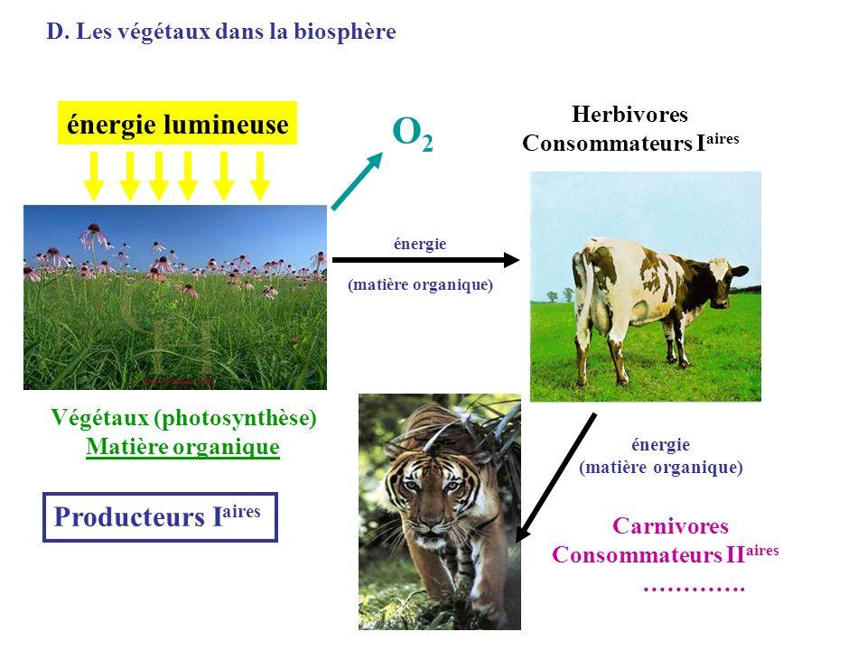 D. Les végétaux dans la biosphère énergie lumineuse Végétaux (photosynthèse) Matière organique Herbivores Consommateurs I aires Carnivores Consommateu