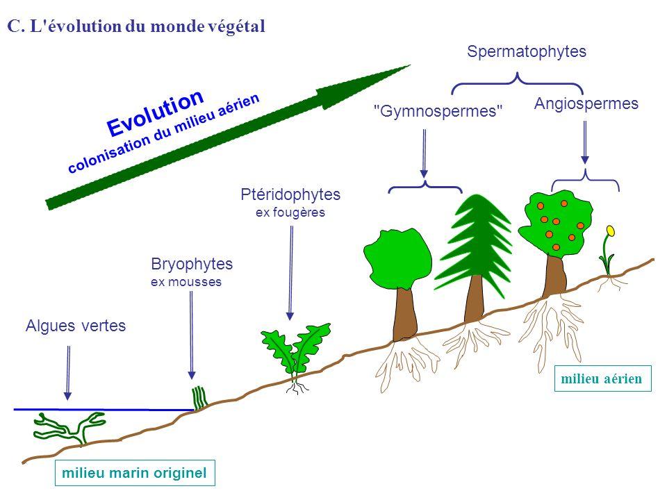 Algues vertes Bryophytes ex mousses Ptéridophytes ex fougères