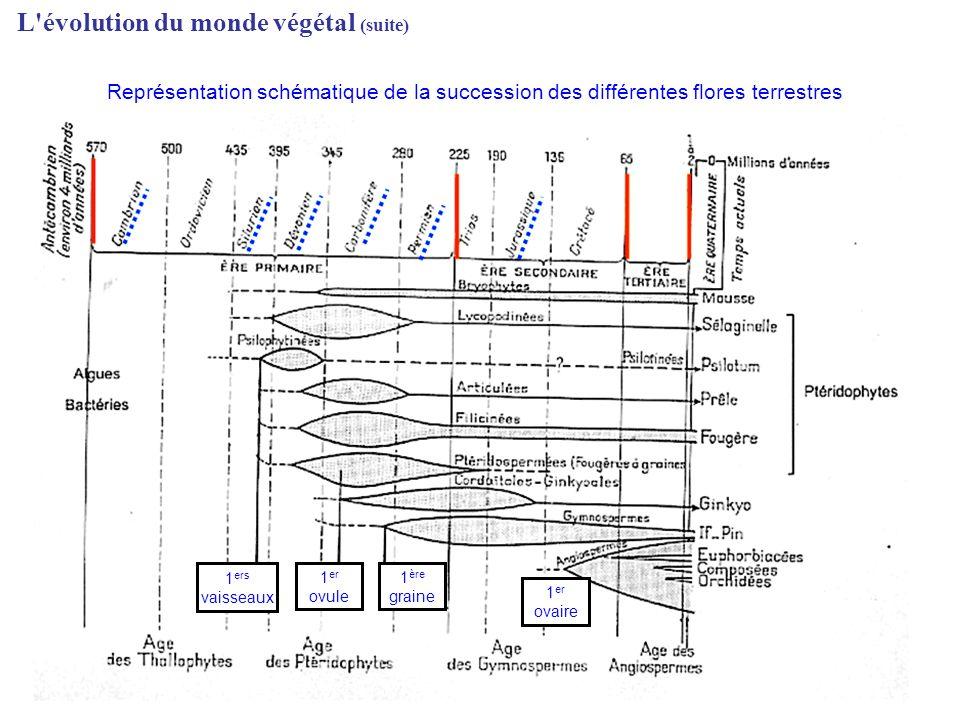 L'évolution du monde végétal (suite) 1 ers vaisseaux 1 er ovule 1 ère graine 1 er ovaire Représentation schématique de la succession des différentes f