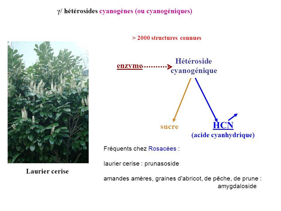 Laurier cerise Hétéroside cyanogénique enzyme sucre HCN (acide cyanhydrique) Fréquents chez Rosacées : laurier cerise : prunasoside amandes amères, gr