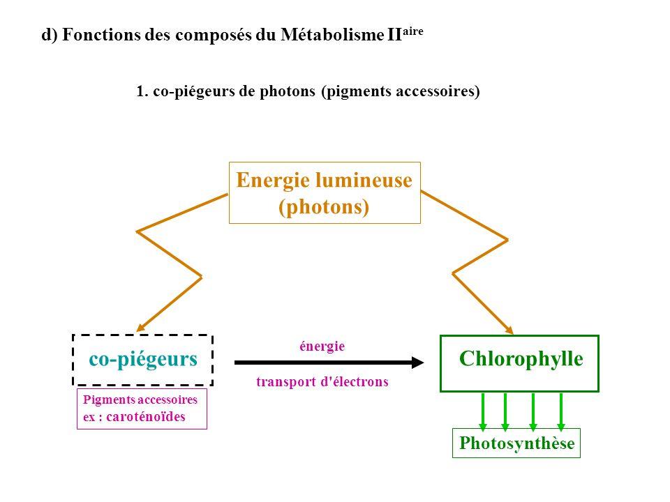 d) Fonctions des composés du Métabolisme II aire 1. co-piégeurs de photons (pigments accessoires) Chlorophylle co-piégeurs énergie transport d'électro