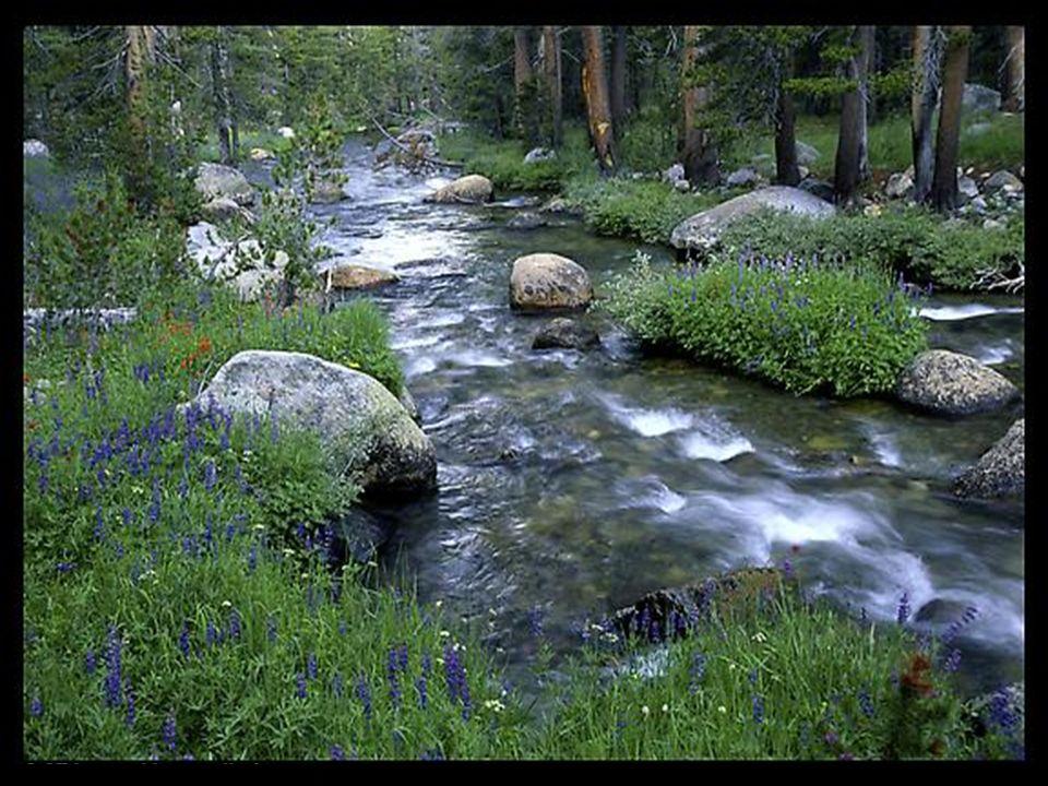 Comme la source qui fait naître le ruisseau, Comme le ruisseau qui fait germer Le long de son cours, Ta vie sera féconde.