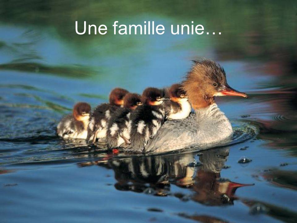 Une famille unie…