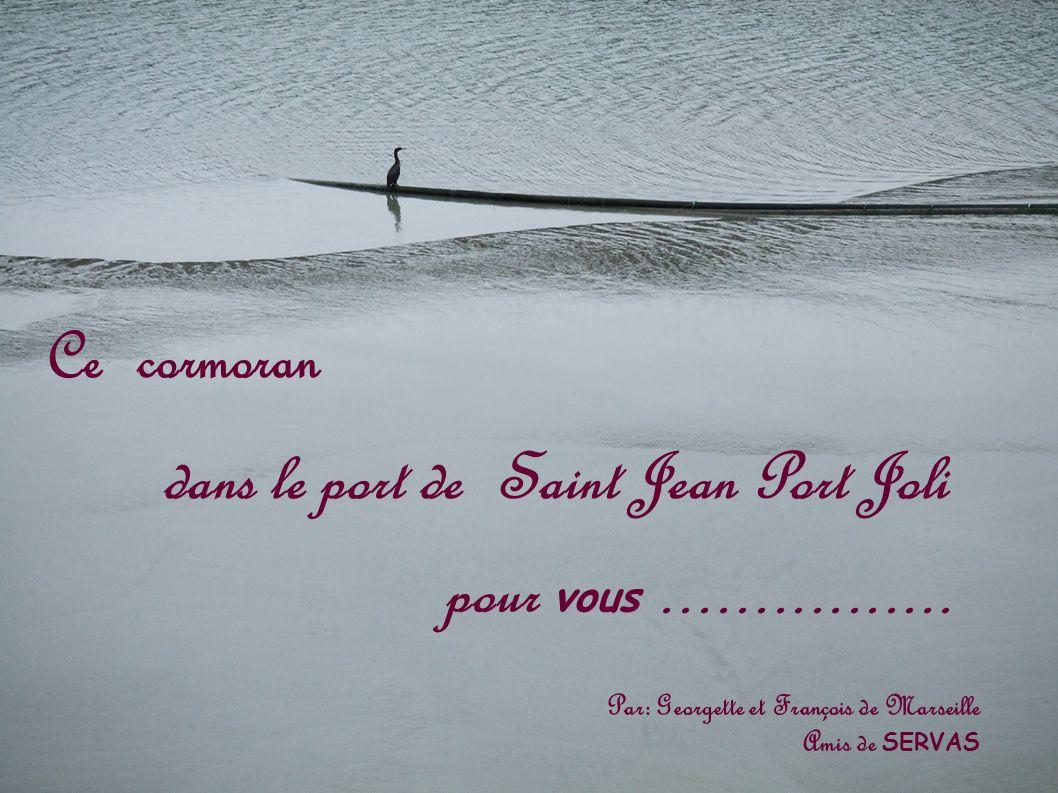 dans le port de Saint Jean Port Joli Ce cormoran pour vous................ Par: Georgette et François de Marseille Amis de SERVAS