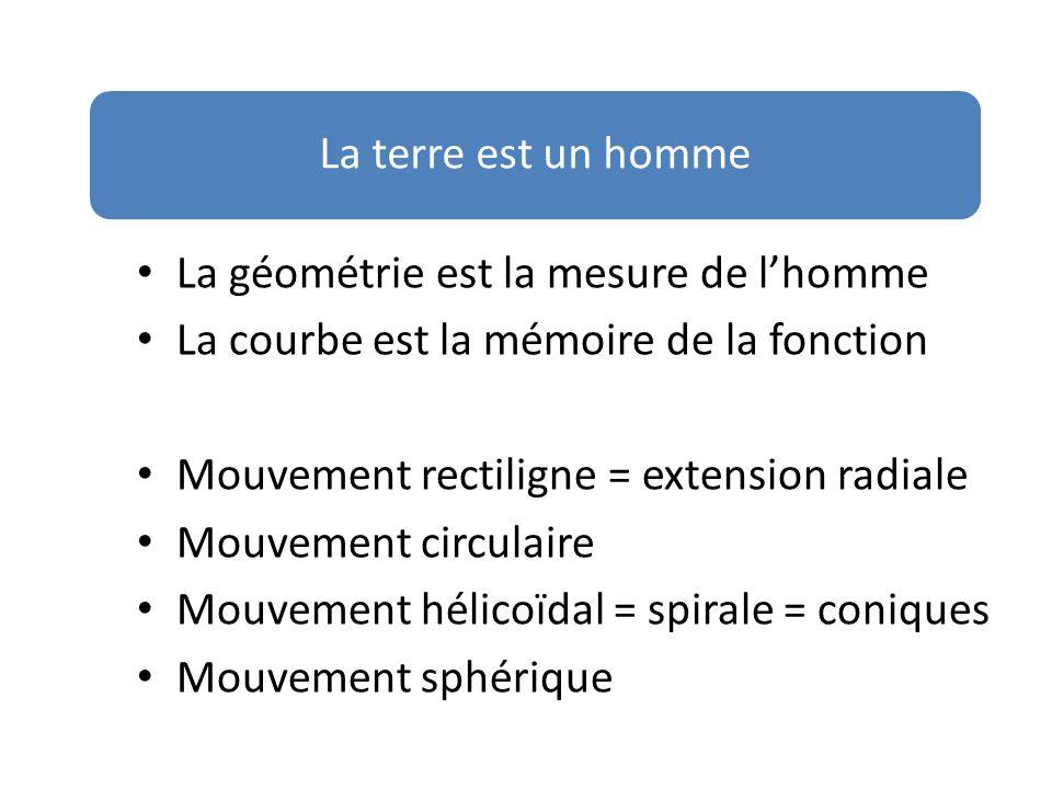 La géométrie est la mesure de lhomme La courbe est la mémoire de la fonction Mouvement rectiligne = extension radiale Mouvement circulaire Mouvement h