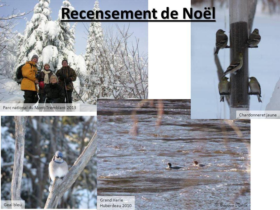 Recensement de Noël © Suzanne Maillé Geai bleu Chardonneret jaune Grand Harle Huberdeau 2010 Parc national du Mont-Tremblant 2013