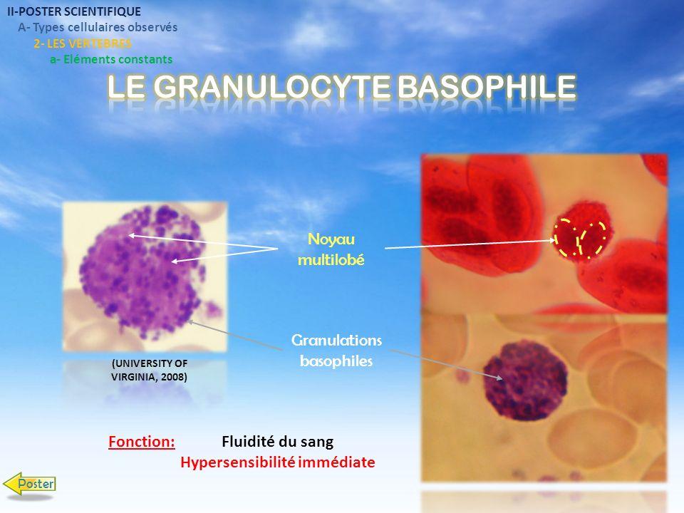 II-POSTER SCIENTIFIQUE A- Types cellulaires observés 2- LES VERTEBRES Petit Lymphocyte Grand Lymphocyte Granuleux a- Eléments constants Grand Lymphocyte Noyau Cytoplasme Fonction de cytotoxicité Poster