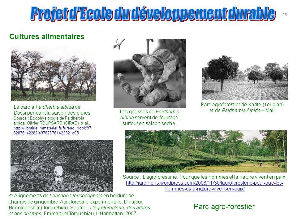 19 Cultures alimentaires Parc agroforestier de Karité (1er plan) et de Faidherbia Albida – Mali Les gousses de Faidherbia Albida servent de fourrage,