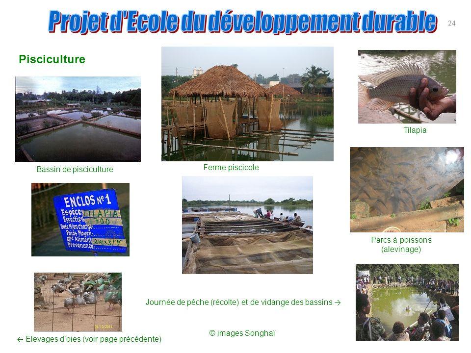 24 Pisciculture Bassin de pisciculture Tilapia Ferme piscicole Parcs à poissons (alevinage) Elevages doies (voir page précédente) Journée de pêche (ré