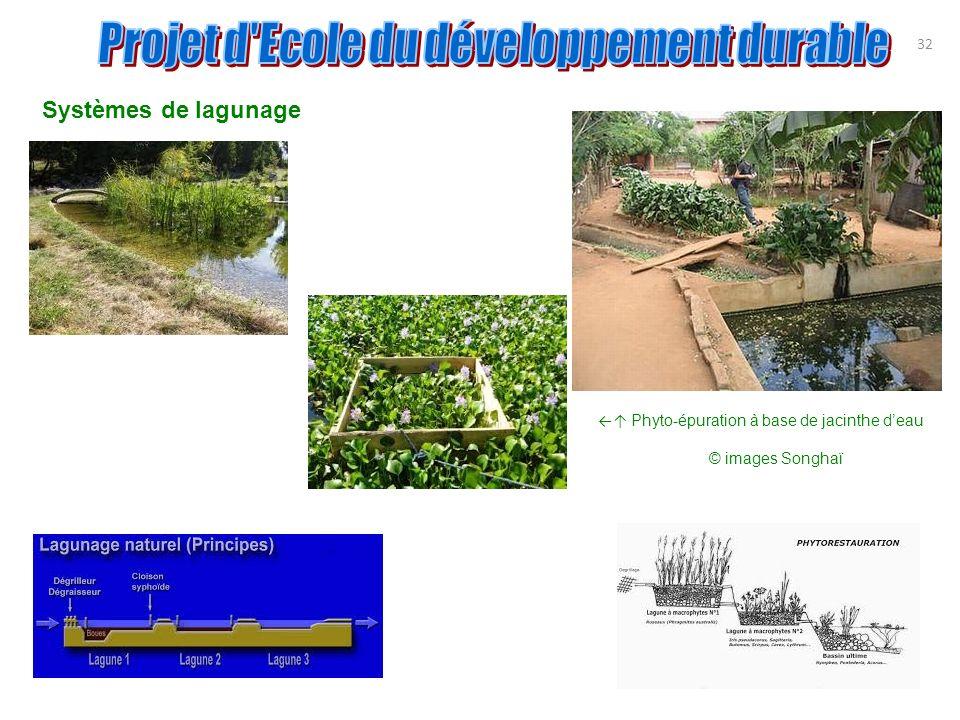 Systèmes de lagunage 32 Phyto-épuration à base de jacinthe deau © images Songhaï