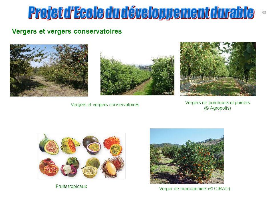 Vergers et vergers conservatoires 33 Vergers de pommiers et poiriers (© Agropolis) Vergers et vergers conservatoires Fruits tropicaux Verger de mandar