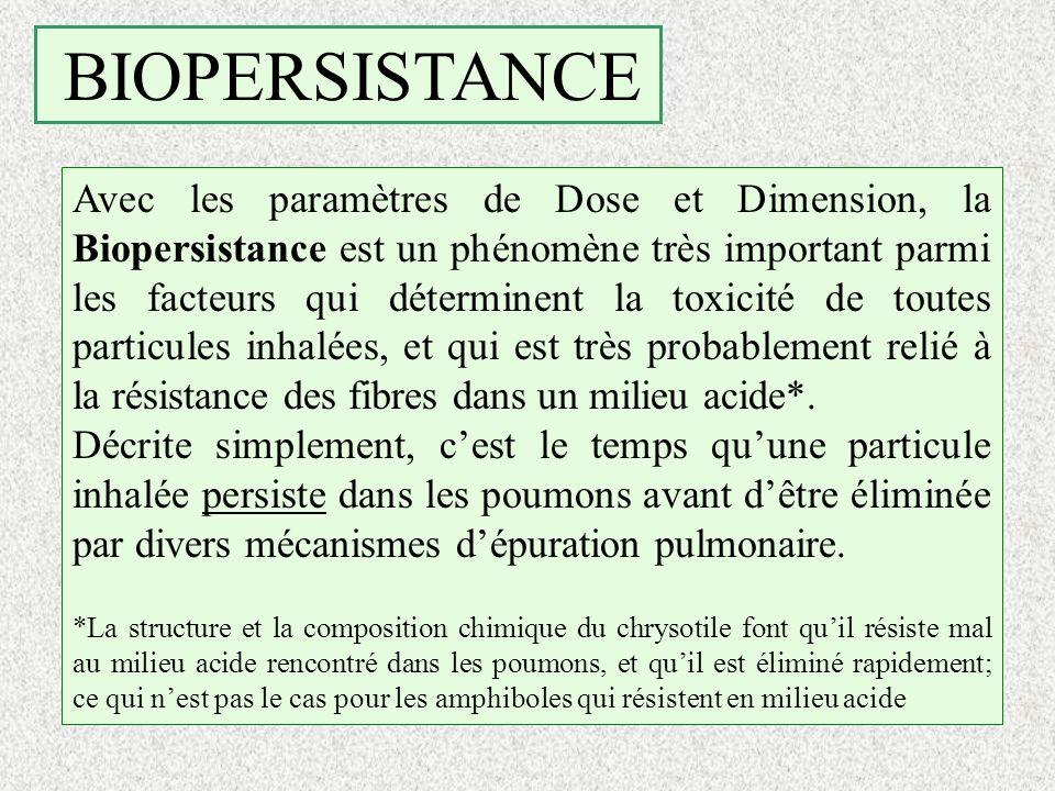 BIOPERSISTANCE Avec les paramètres de Dose et Dimension, la Biopersistance est un phénomène très important parmi les facteurs qui déterminent la toxic