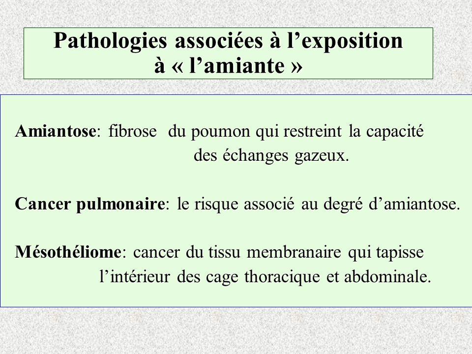 Pathologies associées à lexposition à « lamiante » Amiantose: fibrose du poumon qui restreint la capacité des échanges gazeux. Cancer pulmonaire: le r
