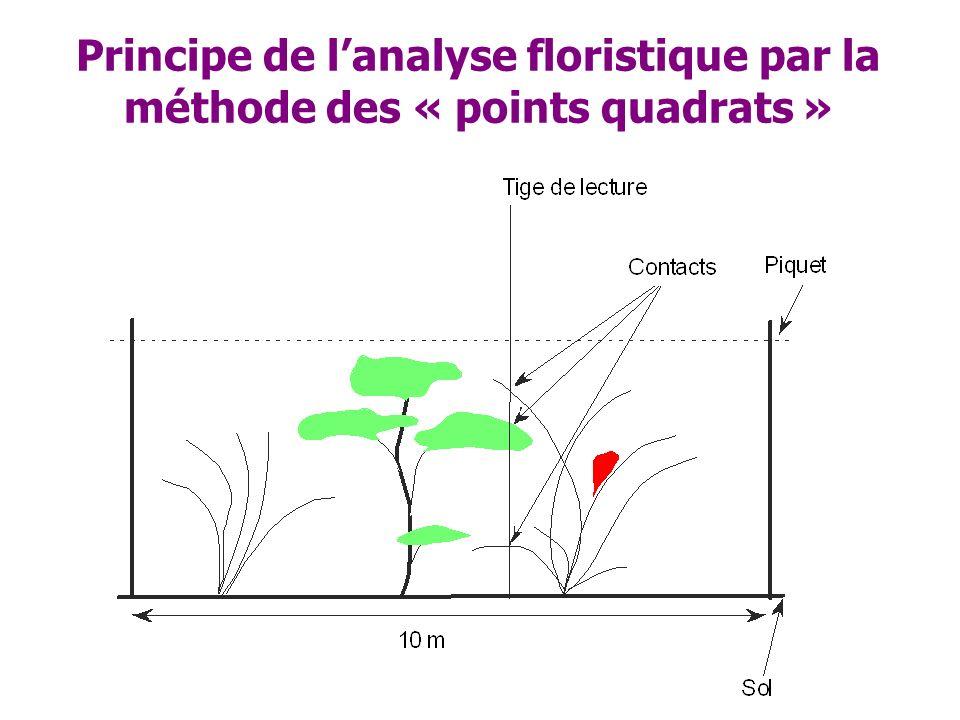 Principe de lanalyse floristique par la méthode des « points quadrats »