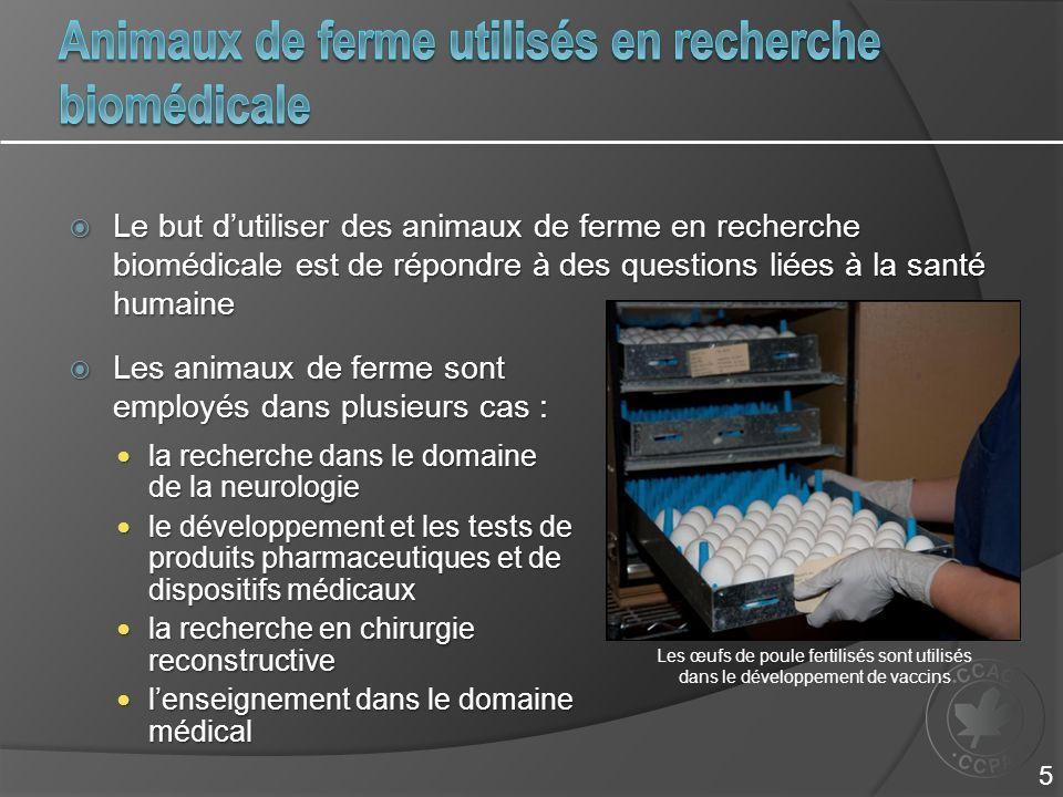Les moutons p.ex., recherche périnatale et néonatale Les porcs p.