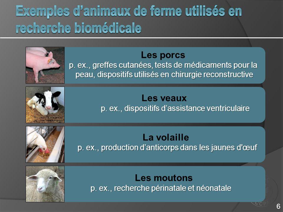 Les moutons p. ex., recherche périnatale et néonatale Les porcs p. ex., greffes cutanées, tests de médicaments pour la peau, dispositifs utilisés en c