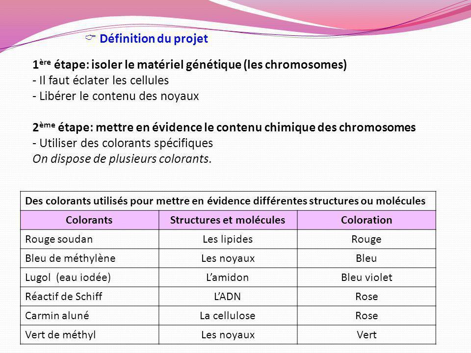 1 ère étape: isoler le matériel génétique (les chromosomes) - Il faut éclater les cellules - Libérer le contenu des noyaux 2 ème étape: mettre en évid