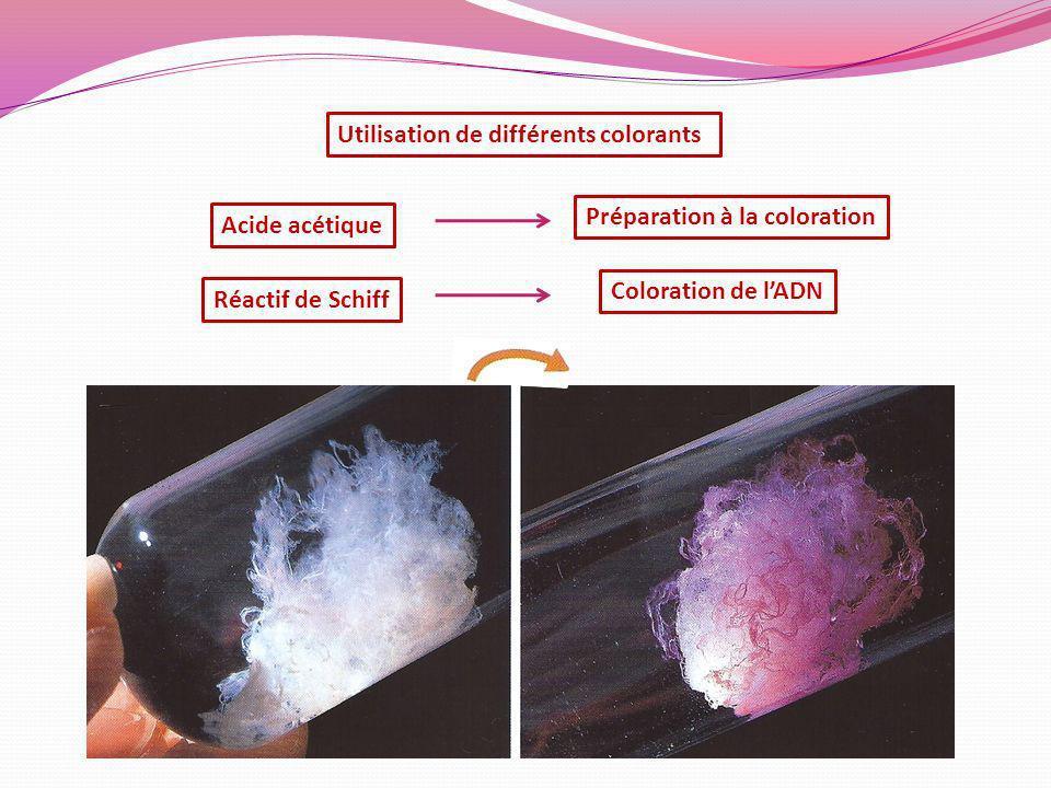 Préparation à la coloration Réactif de Schiff Coloration de lADN Acide acétique Utilisation de différents colorants