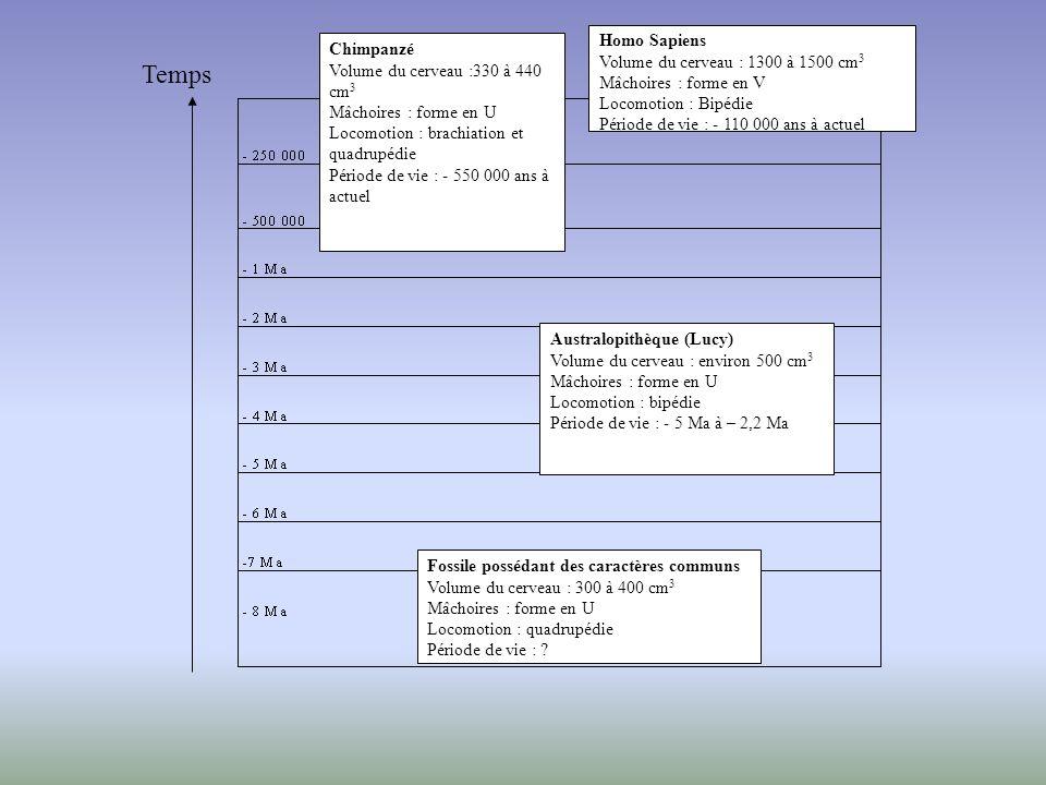 Activité 5 : Le professeur amène lidée que lon peut envisager l existence dune forme fossile possédant des caractères communs au Chimpanzé et à l Homm