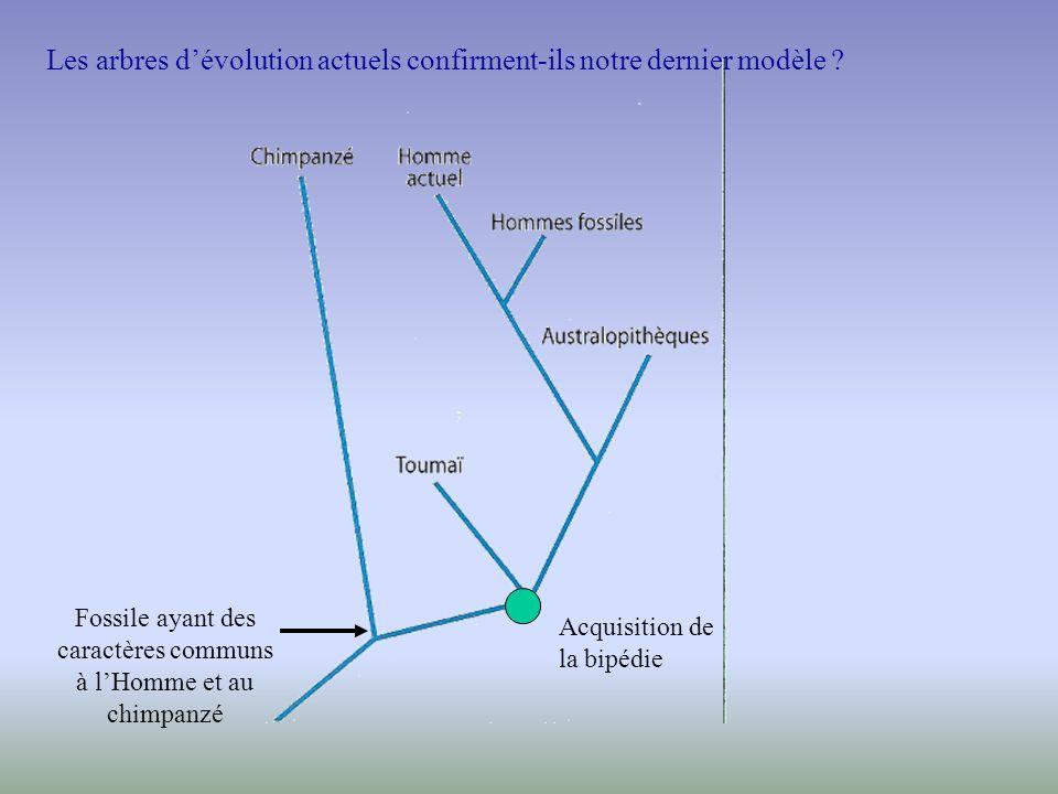 Chimpanzé Volume du cerveau :330 à 440 cm 3 Mâchoires : forme en U Locomotion : brachiation et quadrupédie Période de vie : - 550 000 ans à actuel Homo Sapiens Volume du cerveau : 1300 à 1500 cm 3 Mâchoires : forme en V Locomotion : Bipédie Période de vie : - 110 000 ans à actuel Australopithèque (Lucy) Volume du cerveau : environ 500 cm 3 Mâchoires : forme en U Locomotion : bipédie Période de vie : - 5 Ma à – 2,2 Ma Fossile possédant des caractères communs Volume du cerveau : 300 à 400 cm 3 Mâchoires : forme en U Locomotion : quadrupédie Période de vie : .