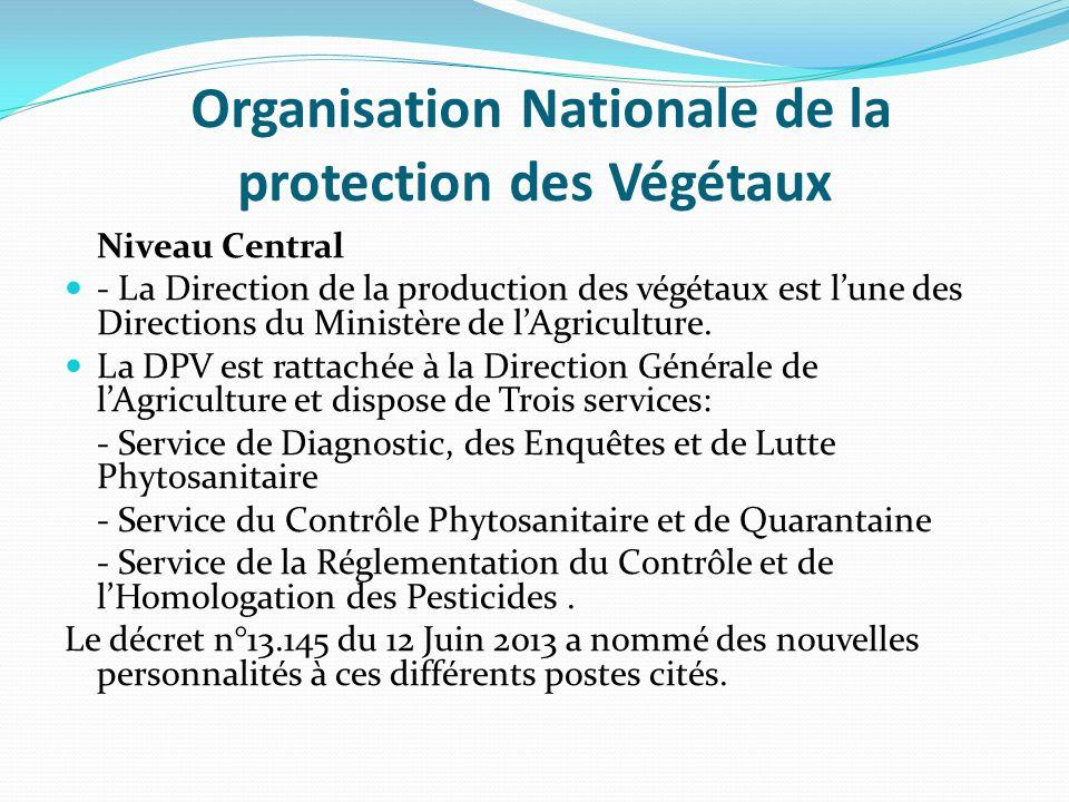 Organisation Nationale de la protection des Végétaux Niveau Central - La Direction de la production des végétaux est lune des Directions du Ministère de lAgriculture.