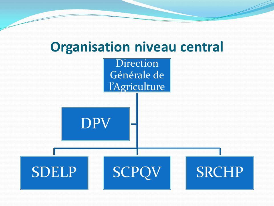 Organisation niveau central Direction Générale de lAgriculture SDELPSCPQVSRCHP DPV
