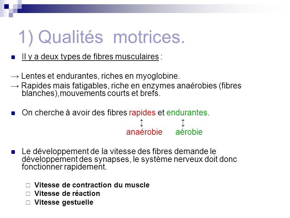 1) Qualités motrices. Il y a deux types de fibres musculaires : Lentes et endurantes, riches en myoglobine. Rapides mais fatigables, riche en enzymes