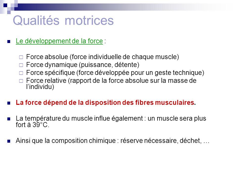 Qualités motrices Le développement de la force : Force absolue (force individuelle de chaque muscle) Force dynamique (puissance, détente) Force spécif