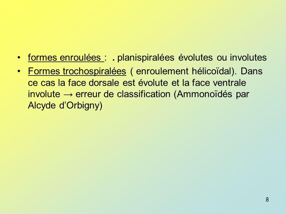9 sens denroulement au sein dun même morphotype Il sobserve commodément sur la face ventrale où il y a louverture, en partant de la loge la plus petite vers la plus grande –dextre (photographie de N.Neogloboquadrina) –senestre Ce sens denroulement est caractéristique denvironnements différents (au point de vue T°C).