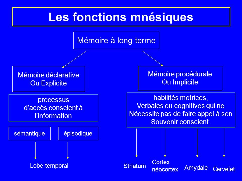 Les fonctions mnésiques Mémoire à long terme Mémoire déclarative Ou Explicite Mémoire procédurale Ou Implicite sémantique épisodique Lobe temporal Str